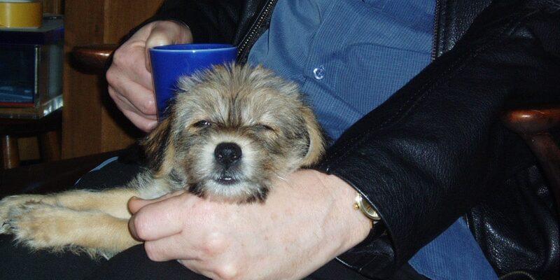 Scrumpie-pup sleeps